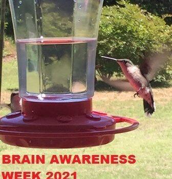 Захисти свій мозок